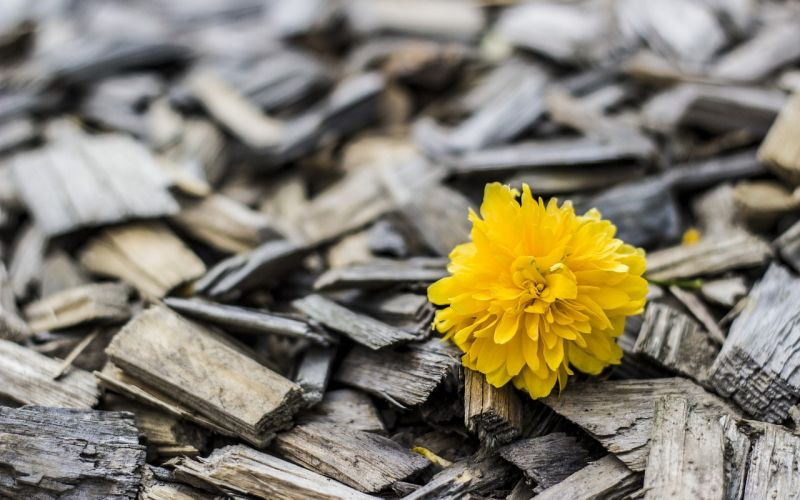 yellow-3702256_1280